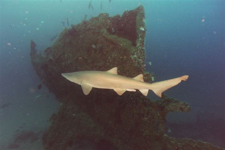The Sharks Of Hatteras